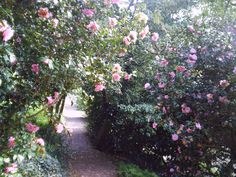 Part of the gardens, with paths winding down the hillside through camellia bushes and magnolia to the river,