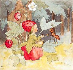 Fraisier des bois (Fr), Wildstrawberry (GB), Walderbeere (D), Fragaria vesca (L) - Ida Bohatta