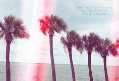 Wanderlust #quotes #palmtrees #wanderlust