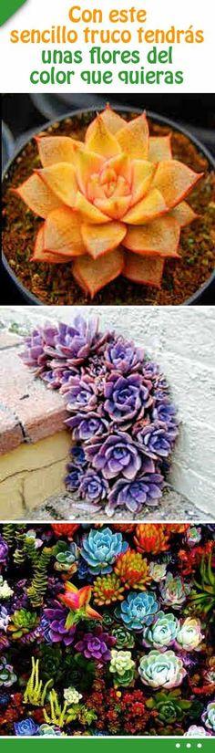 Con este sencillo truco tendrás unas flores del color que quieras #jardin #flores #color #trucos