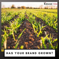 Have you grown in the minds of your customers? The Agriculture industry is built on trust. Smart agriculture branding employs multiple channels to drive traffic and make sales both online and offline!