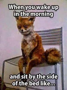 Super Ideas Funny Good Morning Memes Hilarious So True