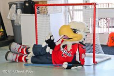 Slapshot - Washington Capitals' mascot