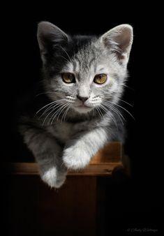 bad mood kitty (Earl by Andy Wellings via 500 px)