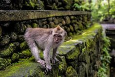 holmobojesen: Sommaren 2016 - Asien - Bali - Ubud - Gili trawang...