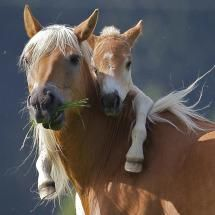 Horse and colt; Posted by: Happy Jack