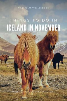 Visiting Iceland in November is an incredible experience. The country has astounding nature and beauty, super unique things to do and also an interesting history.   Read on to find out why you should be exploring the land of fire and ice during November and score some top tips whilst you're here!  Iceland travel | What to do in Iceland | Best time to go to Iceland | Winter in Iceland | Europe travel | Iceland travel tips | #inspiredbyiceland #icelandtrip #reykjavik Iceland Travel Tips, Europe Travel Guide, Travel Guides, Travel Abroad, Europe Destinations, Iceland In November, France, Paris, Plan Your Trip