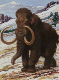 The Woolly Mammoth Is A Close Relative Canvas Print / Canvas Art by Charles R…