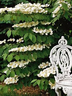Get detailed growing information on this plant and hundreds more in BHG's Plant Encyclopedia./