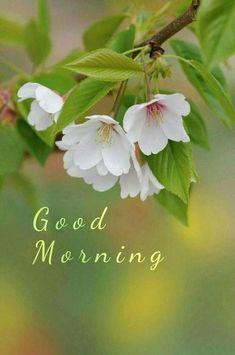 Good Morning Images Flowers, Good Morning Beautiful Quotes, Good Morning Image Quotes, Good Morning Cards, Good Morning Images Hd, Good Morning Inspirational Quotes, Good Morning Love, Good Morning Messages, Good Morning Greetings