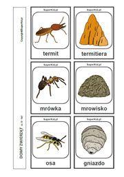 Domy zwierząt - arkusz nr 8 Montessori, Science, Education, Animals, Activities, Animales, Animaux, Flag, Teaching