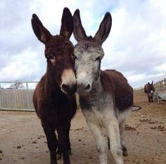 #allyouneedislove .. | love  | donkey | black and white | karma | yin and yang
