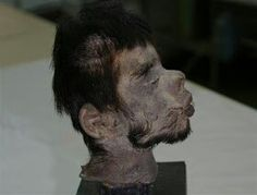 A remarkably well-preserved shrunken head has just been authenticated by DNA analysis, which provides strong evidence that anecdotal accounts of violent head-hunting in South America were true.   According to the scientists, he was probably a member of a group that fought the Jivaro-Shuar tribes of Ecuador. These tribes also lived in Peru during the post-Columbian period, and were thought to make ritual shrunken heads out of their enemies.  Although Kahila Bar-Gal said the DNA could not…