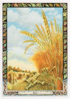 Wheat ((Triticum aestivum) - Druid Plant Oracle by Stephanie Carr-Gomm, Philip Carr-Gomm, Will Worthington