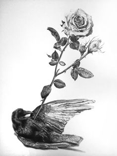 Rose Drawing Crow and Arrow Giclee print on Museo 250 paper // 12 x 15 inches Please allow up to 2 weeks for delivery - Crow and Arrow Giclée print on Museo 250 paper // 12 x 16 inches Please allow up to 2 weeks for delivery Dark Drawings, Graphite Drawings, Amazing Drawings, Realistic Drawings, Love Drawings, Animal Drawings, Crows Drawing, Plant Drawing, Drawing Art