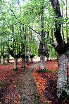 Los bosques vascos que no puedes perderte este otoño.Urkiola Bizkaia Basque Country