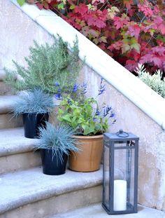 plants in pots on stairs Amazing Gardens, Beautiful Gardens, Potted Plants, Garden Plants, Outdoor Stairs, Entrance Ways, Garden Inspiration, Garden Ideas, Replant