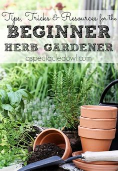 Tips, Tricks & Resources to Grow Your Own Herb Garden - A Spectacled Owl