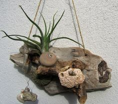 Air plant and driftwood arrangement by DriftwoodDecorByBeth on Etsy Air Plants, Driftwood, Unique Jewelry, Handmade Gifts, Etsy, Vintage, Decor, Kid Craft Gifts, Decoration