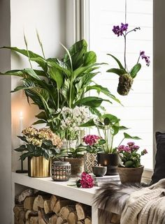32 Lovely House Plants In The Bathroom. There are lots of reasons having plants in your home is great for you. A lot of people keep their plants in pots which do not drain. Decor, House Plants, Green Interiors, Hanging Plants, Green Decor, Cool Plants, Green Plants, Plant Decor, Bathroom Plants