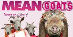 29 Movies Drastically Improved With Goats. Never turn your back on a goat. The Hashtag Game for creating this glorious addition to the internet.