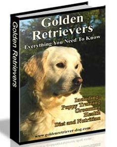 Golden Retriever Care And Training Guide - https://glimpsebookstore.com/golden-retriever-care-and-training-guide/