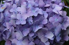 purple flowers spring -  purple flowers spring free stock photo Dimensions:3629 x 2419 Size:4.58 MB  - http://www.welovesolo.com/purple-flowers-spring/