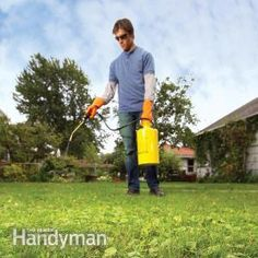 How to Eliminate Weeds From Your Grass