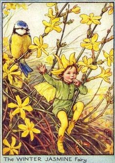 """The """"Winter Jasmine Fairy"""" from the Winter Fairies by Cicely Mary Barker"""