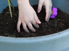 Reasons to Grow a Garden with your Kids