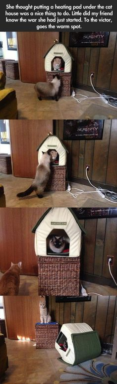 Farker cynicalminion posted this cat battle (the cats happen to belong to Farker Genevieve Marie) in this weekend's Caturday thread on Fark