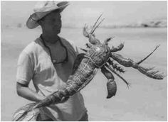 "In 1971 farmer Ted Litton caught this weird animal alive in his artificial pond in Lilac,TX, & got his pic in the paper. 8 hours later his farm was besieged by Army soldiers wearing decontamination suits. They drained the pond, leaving an odd, spheroid cavity in the bottom. Litton says the Army dismissed his beast as a freak of nature yet they confiscated it, promising him $5000 (which never happened) ""What you don't know can hurt you-1860-1998"""