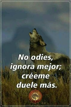 Qoutes, Life Quotes, Husky, Wolf Quotes, Postive Quotes, Wild Wolf, Beautiful Wolves, Osho, Spanish Quotes