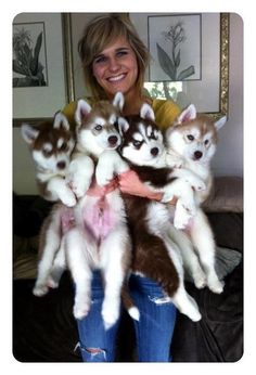 I love love love huskies... this is gonna be me someday lol #husky #dogs