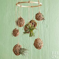 Fill your empty corner with this unique air plant mobile!