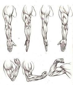 Hands,muscle study. Veri Apriyatno
