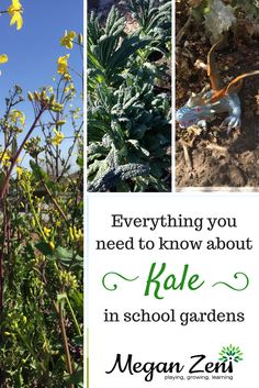 Everything you need to know about growing, harvesting, caring for, and playing in kale in your backyard or school garden! Outdoor Education, Outdoor Classroom, Hardy Plants, Sustainable Gardening, Vegetable Gardening, Nature Study, Life Science, Outdoor Fun, Fruits And Veggies