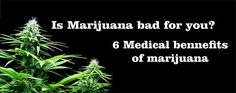 The benefits of marijuana exceed its negative effects. Should marijuana be legalized?Please join me and sign the Federal Petition. http://petitions.moveon.org/sign/legalize-medical-marijuana-5.fb49?source=s.fb.ty