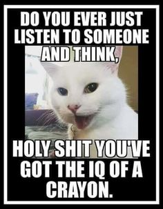 of the population - RandomOverload Funny Cat Memes, Funny Cartoons, Funny Cats, Funny Animals, Animal Memes, Hilarious Quotes, Animal Quotes, Minions, Lol