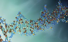 On epigenetic inheritance
