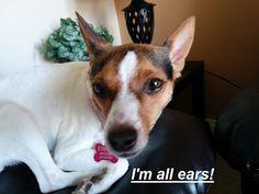 Englishlinks: all ears