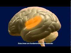 El cerebro feliz: proyecto divulgativo de la Un...