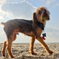 Not to brag, but Galveston Island hosts the most beautiful dogs in the world. Don't believe? See for yourself.