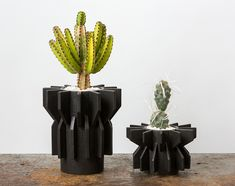 The LA potter has created a series of sculptural ceramic planters filled with unusual plant varieties: sculptural palm fronds, eucalyptus, cacti and more.