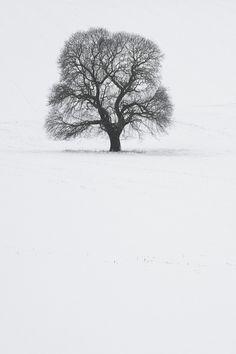 l'arbre