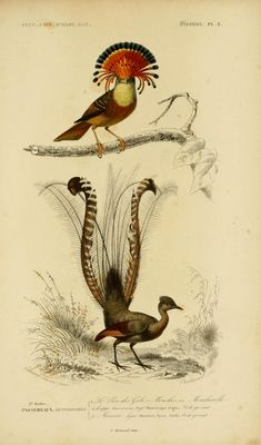 https://www.flickr.com/photos/biodivlibrary/sets/72157629747010617