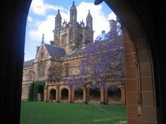 Sydney University jacaranda tree - when it flowers, it's time to start exam study! University Of Sydney, Rock Pools, Daily Photo, Barcelona Cathedral, Beautiful Places, Wanderlust, Around The Worlds, Exam Study, Colleges