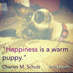 """Felicidad es, un tierno cachorrito..."" --------------------------------------- #happiness #puppy #dog #happinessisawarmpuppy #charlesmschultz #behappyly #behappy #loveanimals #happylife"