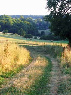 Country Life, Country Living, Country Roads, Country Landscaping, Country Scenes, Hot Days, Wild Flowers, Paths, Fields