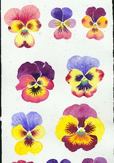 Are these all yours? - SOLD by Gabby MALPAS | PLATFORMstore | Watercolour and Gouache on Arches paper